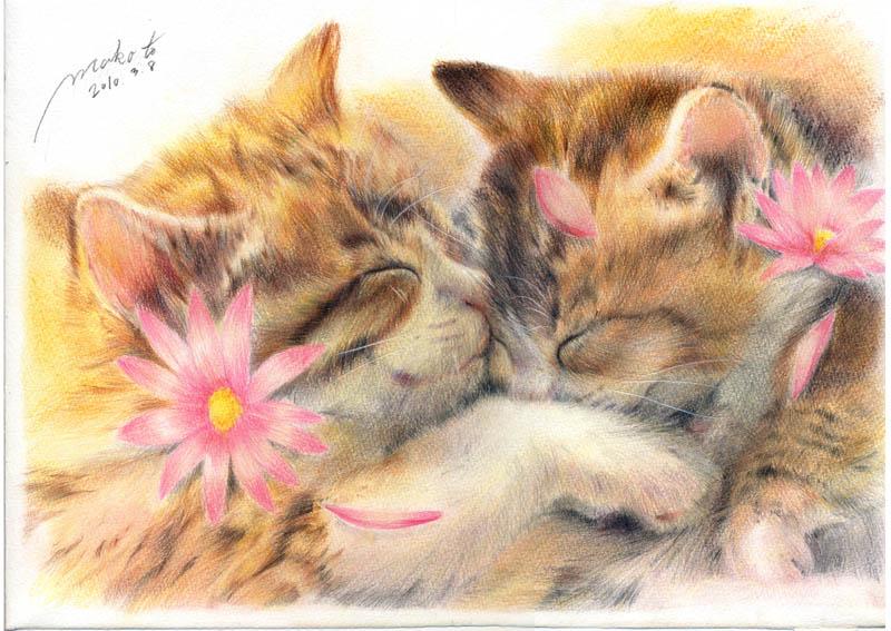 animal cat cat_focus closed_eyes colored_pencil colored_pencil_(medium) copyright_request cuddling eyes_closed flower fur kaminaga_mutsumi no_humans pencil petals realistic signature sleeping traditional_media