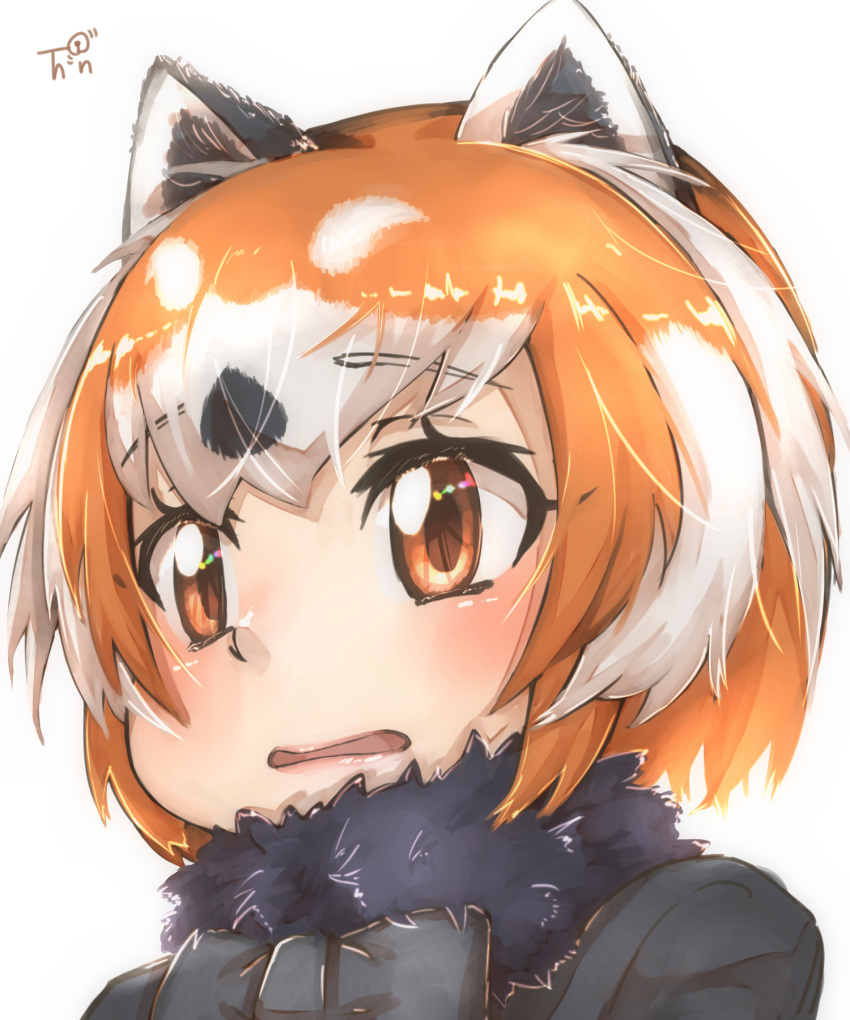 1girl animal_ear_fluff animal_ears bangs black_neckwear bow brown_eyes commentary_request eyebrows_visible_through_hair fur_collar highres kemono_friends lesser_panda_(kemono_friends) looking_at_viewer multicolored_hair orange_hair parted_lips portrait red_panda_ears short_hair simple_background solo thin_(suzuneya) two-tone_hair white_background white_hair