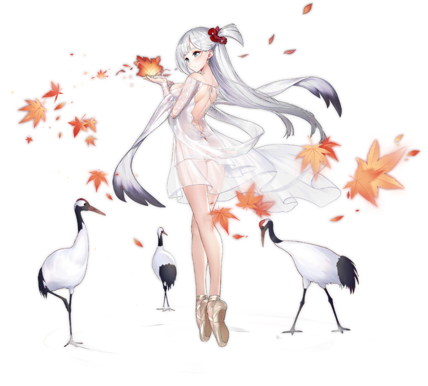 1girl alternate_costume ass autumn_leaves azur_lane backless_dress backless_outfit ballet_slippers bangs bird blue_eyes blush breasts crane_(animal) dress earrings enka_(bcat) expressionless eyebrows_visible_through_hair eyeliner floating_hair gold_footwear hair_ornament hair_scrunchie hands_up jewelry lace lace_sleeves large_breasts long_hair long_sleeves looking_at_hands makeup mole mole_under_eye no_bra no_panties official_art one_side_up red_scrunchie ripples scrunchie see-through shawl shoukaku_(azur_lane) shoukaku_(the_crane_that_dances_with_the_wind)_(azur_lane) shoulder_blades silver_hair solo standing tachi-e thighs tiptoes transparent_background white_dress wind