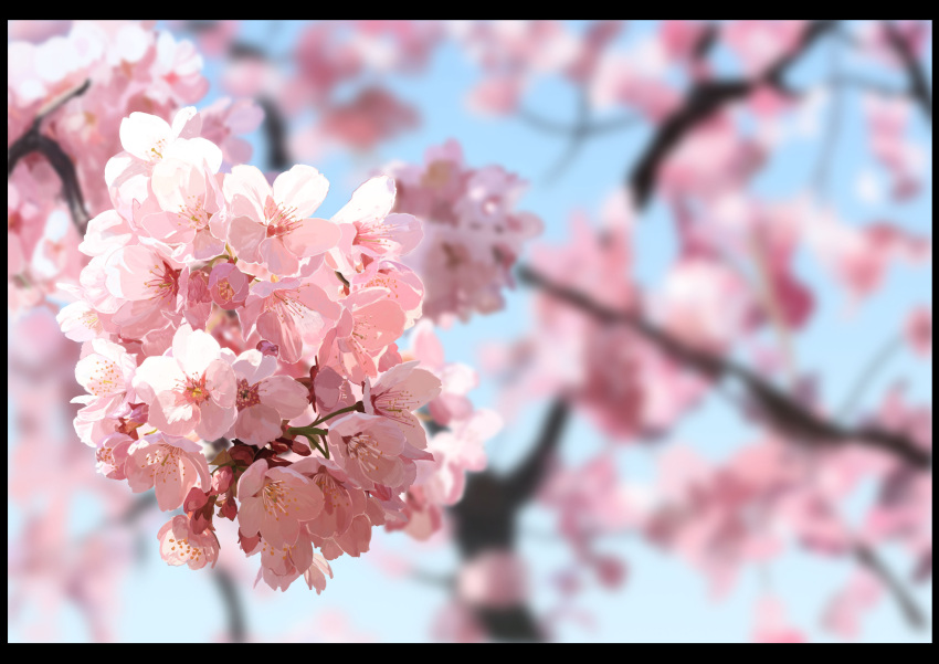 absurdres black_border blue_sky blurry blurry_background border branch cherry_blossoms close-up commentary_request day depth_of_field flower highres n_bayashi nature no_humans original photorealistic pink_flower scenery sky tree_branch