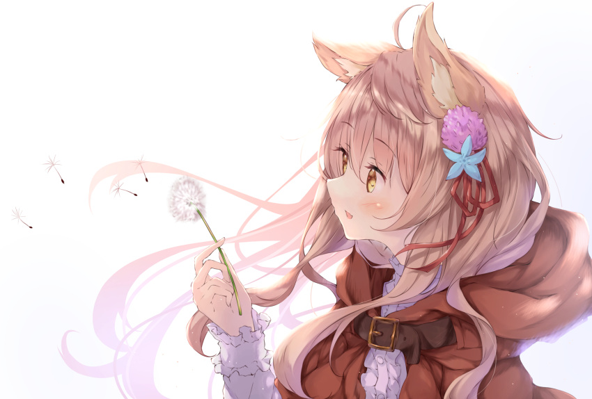 1girl ahoge animal_ears belt borrowed_character breasts capelet commentary_request eyebrows_visible_through_hair floating_hair flower hair_between_eyes hair_ornament highres holding holding_flower hood hooded_capelet light_brown_hair long_sleeves medium_breasts orange_eyes original red_capelet shirt simple_background ukiwakisen white_background white_shirt wolf-chan_(wataame27) wolf_ears wolf_girl