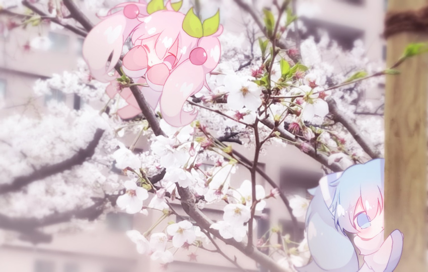 2girls branch building cherry_blossoms cherry_hair_ornament chibi dual_persona flower food_themed_hair_ornament fuyuzuki_gato hair_ornament hatsune_miku light_blue_eyes light_blue_hair minigirl multiple_girls one_eye_closed peeking_out photo_background pink_eyes pink_hair pink_legwear pink_sleeves sakura_miku scarf shirt sleeves_past_fingers sleeves_past_wrists vocaloid white_flower white_scarf white_shirt white_sleeves yuki_miku yuki_miku_(2011)