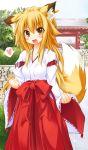 1girl :d animal_ears blonde_hair fang fox_ears fox_tail hakama haori heart japanese_clothes long_hair miko open_mouth original ribbon-trimmed_sleeves ribbon_trim smile spoken_heart tachi_yure tail yellow_eyes