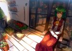 1girl ascot chair florist flower_shop green_hair highres kazami_yuuka long_sleeves open_clothes open_vest plant potted_plant red_eyes shirt shop skirt smile solo touhou uu_uu_zan vest