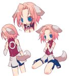 blue_eyes collar haruno_sakura inumimi naruto pink_hair short_hair shorts