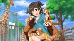 1girl ;d akagi_miria animal artist_request black_hair brown_eyes highres idolmaster idolmaster_cinderella_girls jpeg_artifacts official_art one_eye_closed open_mouth red_panda sitting skirt smile solo two_side_up