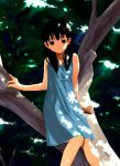 1girl bare_shoulders black_eyes black_hair dappled_sunlight dress houmitsu in_tree long_hair nature original sitting sitting_in_tree solo sunlight tree