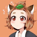 1girl animal_ears brown_hair extra genshi_shin'ichi leaf leaf_on_head raccoon_ears red_eyes short_hair tanuki_mob topknot topknot_tanuki touhou translated wild_and_horned_hermit