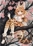 1girl animal_ears ankle_boots arm_support blonde_hair boots bow bowtie cat_ears cat_tail cherry_blossoms dated fang from_below in_tree kemono_friends looking_at_viewer looking_down mosho orange_eyes serval_(kemono_friends) short_hair signature sitting sitting_in_tree skirt smile solo tail traditional_media tree tree_branch watercolor_(medium) waving