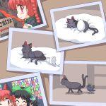 braid cat crow egg eggs geetsu kaenbyou_rin kaenbyou_rin_(cat) photo_(object) picture reiuji_utsuho reiuji_utsuho_(bird) touhou