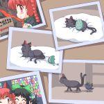 cat crow egg eggs geetsu kaenbyou_rin kaenbyou_rin_(cat) photo_(object) picture reiuji_utsuho reiuji_utsuho_(bird) touhou