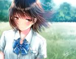 1girl blue_bow blue_neckwear blurry blurry_background blush bow bowtie breast_pocket brown_eyes brown_hair buttons closed_mouth collared_shirt commentary_request day depth_of_field dress_shirt eyebrows_visible_through_hair field grass kazuharu_kina looking_away looking_down original outdoors pocket school_uniform shirt short_hair short_sleeves signature upper_body white_shirt wing_collar