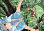 5girls barefoot between_legs black_hair blonde_hair blue_dress blue_eyes blue_hair bow chair cirno daiyousei dress eyebrows_visible_through_hair from_above grass green_hair hair_between_eyes hair_bow hand_between_legs headdress in_tree looking_at_viewer looking_up luna_child mukaino_kei multiple_girls outstretched_leg puffy_short_sleeves puffy_sleeves red_dress red_ribbon ribbon short_hair short_sleeves side_ponytail sitting smile solo_focus spread_legs star_sapphire sunny_milk table touhou tree white_dress wings