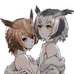 2girls bangs black_hair breasts brown_eyes brown_hair coat commentary_request eurasian_eagle_owl_(kemono_friends) eyebrows_visible_through_hair fur-trimmed_coat fur_trim head_wings inumoto jacket_pull kemono_friends looking_at_viewer medium_breasts multicolored_hair multiple_girls northern_white-faced_owl_(kemono_friends) off_shoulder parted_lips short_hair sideboob silver_hair simple_background undressing upper_body white_background white_coat yuri