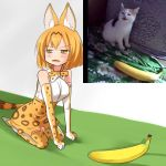 1girl :3 animal_ears banana bangs bare_shoulders blush bob_cut bow bowtie breasts brown_hair cat clenched_hands commentary_request elbow_gloves eyebrows_visible_through_hair fangs food from_side fruit gloves half-closed_eyes high-waist_skirt kemono_friends large_breasts looking_to_the_side meme multicolored_hair open_mouth orange_eyes orange_gloves orange_hair orange_legwear orange_neckwear orange_skirt parody photo photo-referenced print_gloves print_legwear print_neckwear print_skirt real_life reference_photo_inset seiza serval_(kemono_friends) serval_ears serval_girl serval_print serval_tail setia_pradipta shirt short_hair sitting skirt sleeveless sleeveless_shirt solo streaked_hair tail thigh-highs two-tone_hair v-shaped_eyebrows white_footwear white_shirt