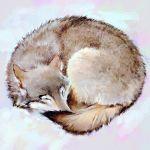 animal arctic_fox curled_up ilya_kuvshinov no_humans original simple_background sleeping solo white_background