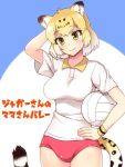 1girl alternate_costume animal_ear_fluff animal_ears blonde_hair blush buruma collared_shirt commentary_request cowboy_shot eyebrows_visible_through_hair hand_behind_head hand_on_hip jaguar_(kemono_friends) jaguar_ears jaguar_print jaguar_tail kemono_friends multicolored_hair shirt short_hair short_sleeves solo sportswear t-shirt tail totokichi translated volleyball yellow_eyes