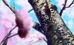 blue_sky blurry blurry_foreground cherry_blossoms commentary_request day depth_of_field hidarikiki_no_manjuu highres no_humans original outdoors sakura scenery sky spring_(season) tree winter