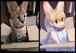 1girl :< animal_ears bangs bare_shoulders belt_collar black_border blonde_hair border box cardboard_box closed_mouth collar commentary_request dated green_eyes hair_between_eyes in_box in_container kemono_friends korean_commentary no_nose photo-referenced reference_photo roonhee serval serval_(kemono_friends) serval_ears serval_print shirt short_hair signature sitting sleeveless sleeveless_shirt solo white_shirt