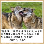 biting closed_eyes fangs field fur grass korean lowres original photo reference_photo roonhee translation_request wolf