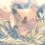 blurry creatures_(company) depth_of_field fur game_freak gen_1_pokemon grass highres manino_(mofuritaionaka) nintendo no_humans outdoors pikachu pokemon realistic signature solo