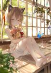 1girl amafuyu animal_ears bandage bandaged_leg bandages bangs bare_arms bare_legs bare_shoulders barefoot blush bouquet bug butterfly cat_ears closed_eyes closed_mouth collar day dress eyebrows_visible_through_hair fake_animal_ears flower hair_ribbon highres holding holding_bouquet indoors insect jar long_hair on_table original panties pantyshot pantyshot_(sitting) pink_flower plant ponytail potted_plant red_flower red_ribbon ribbon rose sidelocks sitting sleeveless sleeveless_dress smile solo speaker sunlight table underwear upskirt white_dress white_flower white_panties white_rose window yellow_flower yellow_rose