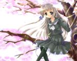 black_legwear blonde_hair capura_lin cherry_blossoms long_hair pantyhose ribbon school_uniform smile wallpaper