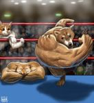 2019 action animal animal_focus cat check_commentary closed_eyes commentary_request crossed_arms crowd dog flexing fox furry matataku md5_mismatch meme muscle muscle_fox pose punching right-hook_dog shiba_inu twitter wrestling_ring