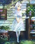 1girl animal_ears blue_eyes cat_ears cat_girl cat_tail closed_mouth commentary_request day flower_basket flower_pot flower_request frilled_sleeves frills full_body grass head_tilt highres hirokiku house light_rays light_smile looking_to_the_side on_grass original outdoors own_hands_together pantyhose peaceful plant plant_request potted_plant short_hair smile solo standing sunbeam sunlight tail tail_raised v_arms white_footwear white_hair white_legwear white_tail