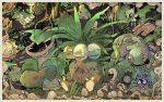 awai_(pixiv29777040) bellsprout budew bulbasaur carnivine celebi cradily exeggcute exeggutor grass no_humans plant pokemon pokemon_(creature) shroomish shuckle sleeping sunflora tangela victreebel weepinbell wormadam