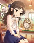 1girl animal bird bow brown_eyes brown_hair chair hair_bow highres idolmaster idolmaster_cinderella_girls indoors knees knees_together long_hair official_art open_mouth owl sitting skirt solo staring staring_contest tachibana_arisu