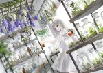1girl blurry blurry_foreground commentary_request depth_of_field dress dutch_angle flower holding indoors lace lace-trimmed_dress long_hair looking_away naruse_chisato original parted_lips plant purple_flower see-through shelf short_sleeves silver_hair solo standing transparent violet_eyes white_dress white_flower