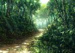 branch dappled_sunlight day forest grass leaf nature no_humans original outdoors path scenery sunlight tree white_sky yuta_mukai