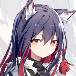 1girl animal_ear_fluff animal_ears arknights black_hair expressionless food gloves hair_between_eyes holding jacket kurisu_tina looking_at_viewer multicolored_hair orange_eyes pocky portrait red_gloves redhead solo texas_(arknights) two-tone_hair wolf_ears zoom_layer
