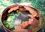 animal blurry blurry_background clover commentary_request damaged day detached_sleeves drum_(container) fish flower flower_on_liquid four-leaf_clover japanese_rice_fish lily_pad lotus mocha_(cotton) no_humans original outdoors rust scenery sunlight water white_flower