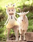 1girl adapted_costume alternate_hairstyle animal_ears bare_shoulders blonde_hair blue_eyes blush brown_hair brown_neckwear child dress extra_ears eyebrows_visible_through_hair full_body giraffe_ears giraffe_girl giraffe_horns giraffe_print giraffe_tail goat gradient gradient_dress gradient_legwear highres kemono_friends kolshica multicolored_hair necktie no_shoes photo_background print_dress print_legwear print_neckwear reticulated_giraffe_(kemono_friends) scarf short_hair sleeveless sleeveless_dress solo sparkle thigh-highs white_dress white_legwear younger