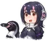 1girl :d animal armband bangs bird black_hair breasts brown_eyes eyebrows_visible_through_hair grape-kun hair_between_eyes hands_on_own_chest headphones highres humboldt_penguin humboldt_penguin_(kemono_friends) kemono_friends lain looking_at_viewer medium_breasts multicolored_hair open_mouth penguin pink_hair simple_background smile two-tone_hair white_background zipper_pull_tab