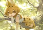 1girl :d animal_ear_fluff animal_ears bangs boots bow bowtie chin_rest commentary day elbow_gloves extra_ears eyebrows_visible_through_hair gloves hair_between_eyes in_tree kemono_friends looking_at_viewer mossi nature open_mouth outdoors print_bow print_gloves print_legwear print_neckwear serval_(kemono_friends) serval_ears serval_print serval_tail smile solo tail thigh-highs tree tree_branch white_footwear yellow_eyes