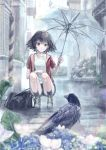 1girl 54cr bag bird black_hair bookbag brown_eyes crow flower highres looking_at_animal nonaka_haru outdoors rain shirt short_hair short_sleeves shorts smile socks squatting transparent transparent_umbrella umbrella white_shirt yesterday_wo_utatte