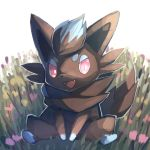 alternate_color between_legs commentary_request fangs flower full_body fur gen_5_pokemon hand_between_legs highres looking_to_the_side no_humans open_mouth pink_eyes pink_flower pokemon pokemon_(creature) shiny_pokemon sitting smile spread_legs tongue yukichi_(tsuknak1) zorua