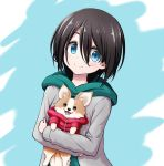 1girl animal animal_hug bangs black_hair blue_background blue_eyes blush chikuwa_(yurucamp) closed_mouth dog eyebrows_behind_hair green_hoodie grey_jacket hair_between_eyes highres hood hood_down hoodie jacket kuena looking_at_viewer open_clothes open_jacket saitou_ena smile two-tone_background upper_body white_background yurucamp