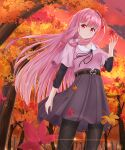 1girl absurdres autumn_leaves belt black_legwear commentary falling_leaves forest from_below glint hair_ribbon hand_up highres kotonoha_akane leaf lens_flare long_hair looking_at_viewer maple_leaf nature outdoors pantyhose pink_hair pink_shirt purple_skirt red_eyes red_sky ribbon shirt shirua_(s4-42424) short_sleeves sidelocks skirt sky smile solo sparkle tree twilight very_long_hair voiceroid