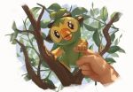 1other brown_eyes commentary_request disembodied_limb fangs fingernails gen_8_pokemon grookey holding leaf looking_at_viewer open_mouth pokemon pokemon_(creature) pov shiny starter_pokemon supearibu tree_branch