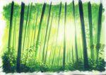 bamboo bamboo_forest border dappled_sunlight day forest green_theme nature original outdoors sawitou_mizuki scenery sunlight traditional_media white_border