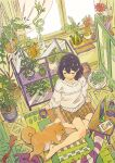 1girl barefoot brown_hair chips closed_eyes coffee cup curtains dog flower food hair_between_eyes hair_ornament hairclip highres holding holding_cup looking_down mug open_mouth original plaid plaid_shorts plant_request potato_chips red_flower red_rose rose short_hair shorts sitting sweater tablet_pc umishima_senbon window