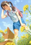 1girl backpack bag blue_shorts blue_sky blurry blurry_foreground blush brown_eyes brown_hair cat closed_mouth collarbone collared_shirt commentary_request day depth_of_field flower gym_uniform hand_up highres long_hair original outdoors pairan shirt short_shorts short_sleeves shorts sky smile solo twintails white_shirt wind_turbine windmill yellow_flower
