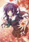 1girl absurdres autumn_leaves black_hair hananomiya_ako highres izumi_tsubasu leaf maple_leaf school_uniform sekai_seifuku_kanojo tagme violet_eyes