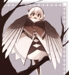 1girl bird_legs bird_tail black_eyes branch brown_feathers commentary_request dress earmuffs eyebrows_visible_through_hair feathered_wings feathers hair_feathers harpy highres kaginoni monster_girl open_mouth original short_hair solo talons white_feathers white_hair winged_arms wings