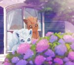 alolan_form alolan_vulpix blue_eyes brown_eyes brown_fur commentary_request day dual_persona flower gen_1_pokemon gen_7_pokemon light_beam no_humans open_mouth outdoors pokemon pokemon_(creature) vulpix window yukichi_(tsuknak1)