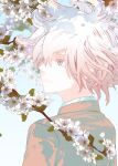 1boy bangs branch brown_jacket cherry_blossoms commentary_request danganronpa_(series) danganronpa_2:_goodbye_despair flower from_behind grey_eyes grey_hair jacket komaeda_nagito lily_(flower) looking_to_the_side male_focus messy_hair pale_skin pink_flower short_hair solo upper_body white_flower yosuga_(hridayam)